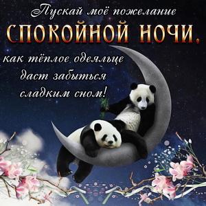 Две панды уютно спят на месяце