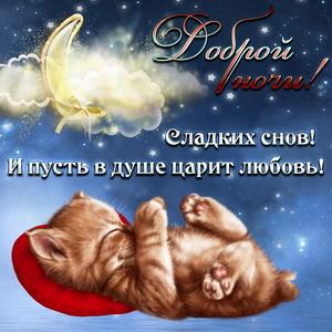 Милый котёнок желает спокойной ночи