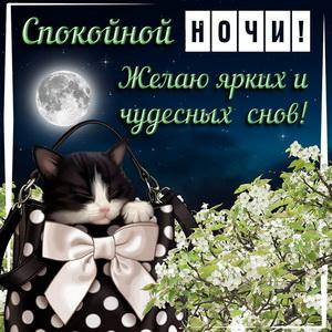 Сонный котик желает Вам ярких и чудесных снов