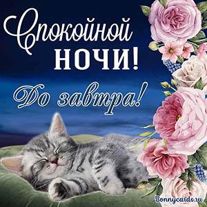 Котёнок желает тебе спокойной ночи на милой открытке