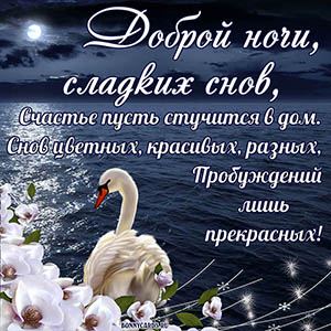 Открытка доброй ночи и сладких снов с белым лебедем