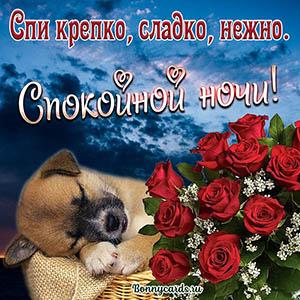 Букет цветов и милый пёсик на открытке спокойной ночи