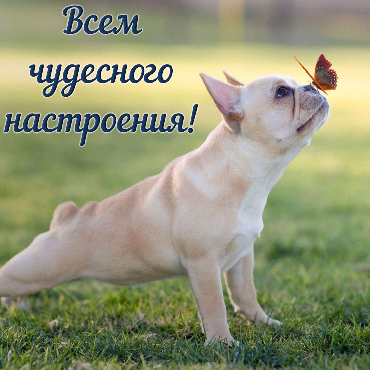 Открытка хорошего настроения - забавный песик с бабочкой на носу