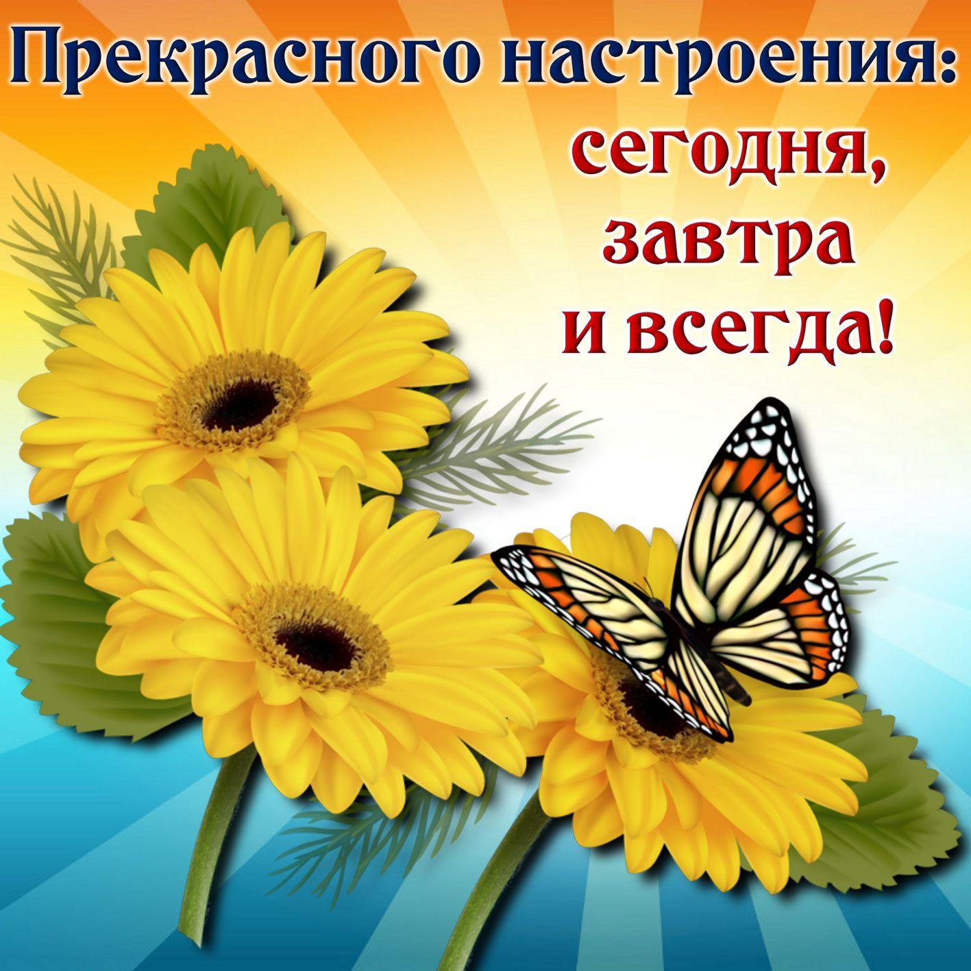 Открытка хорошего настроения - бабочка на ярких подсолнухах