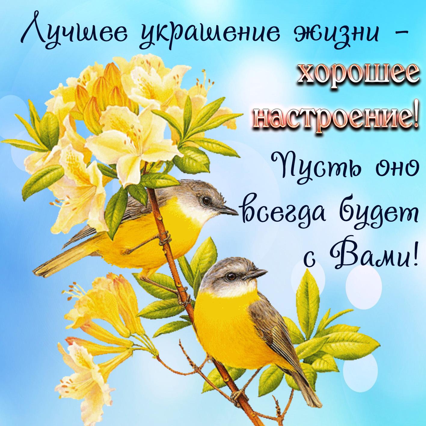 Открытка хорошего настроения с красивыми птичками на веточке