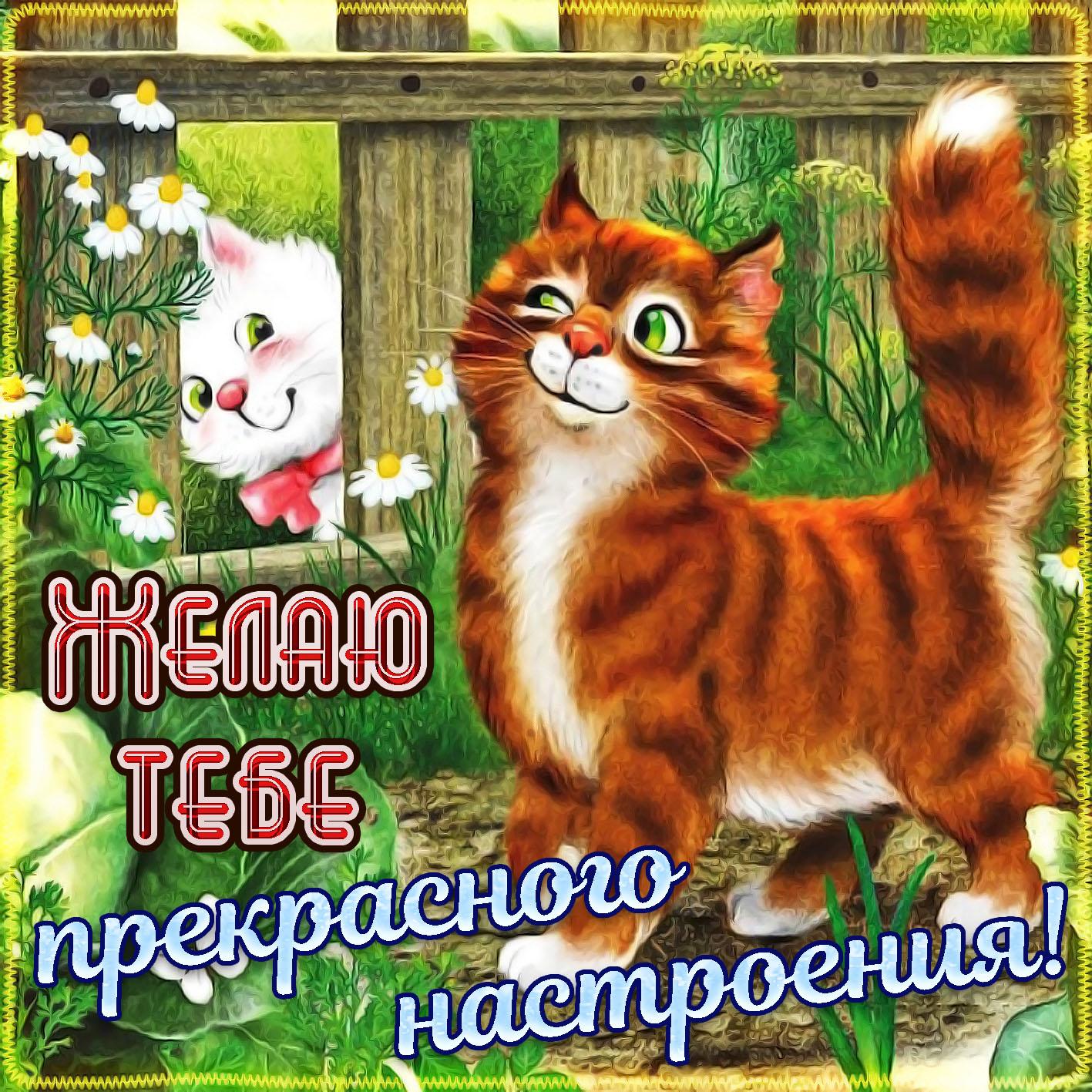 Художественных, открытки хорошего настроения с котом
