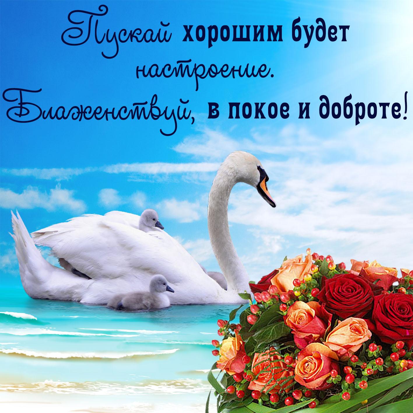 Открытка хорошего настроения - букет цветов и красивый лебедь на воде