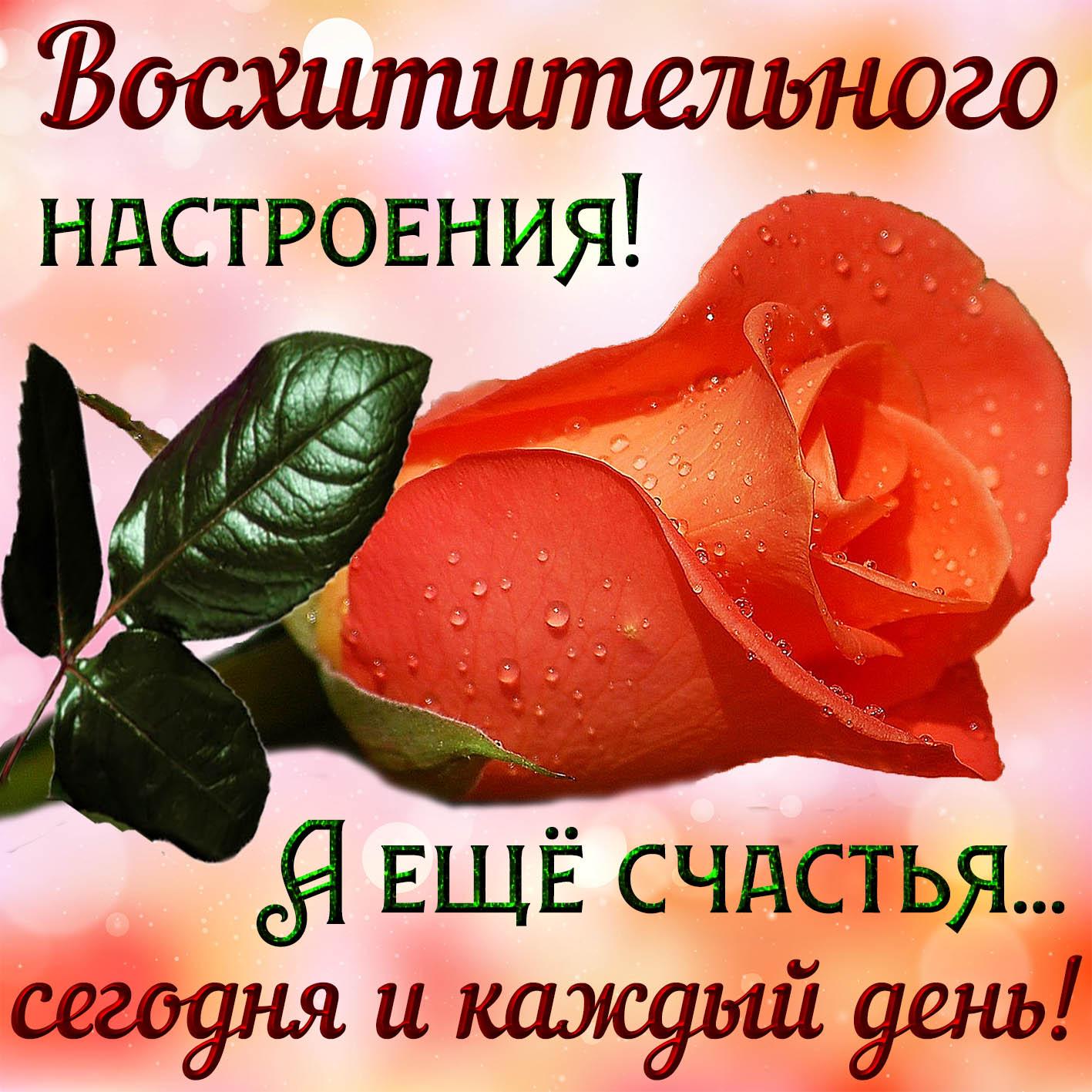 Открытка восхитительного настроения с розой и пожеланием счастья