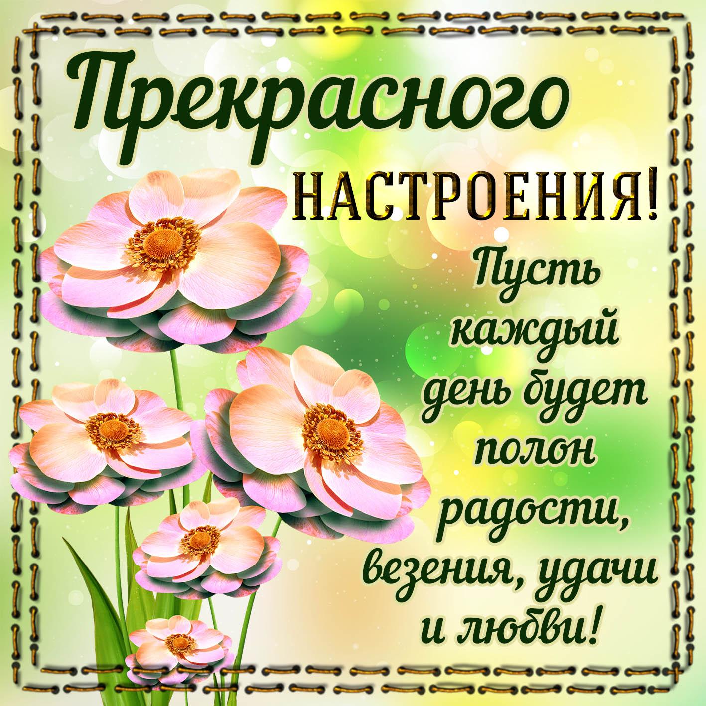 Открытка - цветы в рамочке для прекрасного настроения