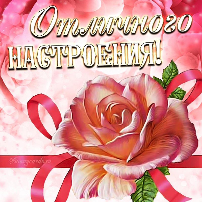 Красивая открытка отличного настроения с розой