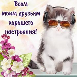 Котик в очках и наушниках
