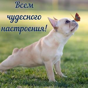 Забавный песик с бабочкой на носу