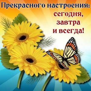 Бабочка на ярких подсолнухах