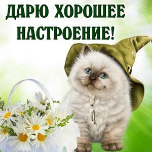 Картинка с пушистым котиком в шляпе