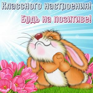 Картинка с милым кроликом на травке