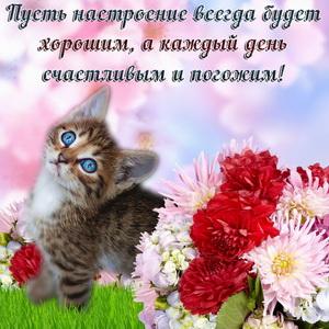 Милый котёнок среди цветов