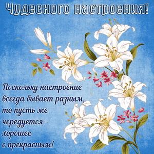 Красивые цветы на голубом фоне