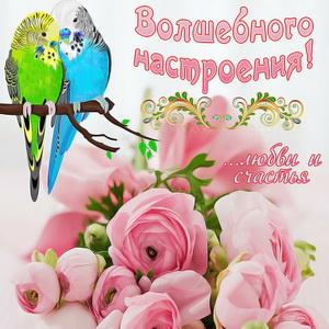 Открытка с попугаями и розами