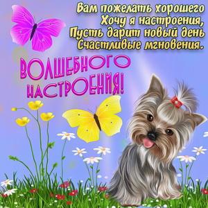 Картинка с собачкой и бабочками