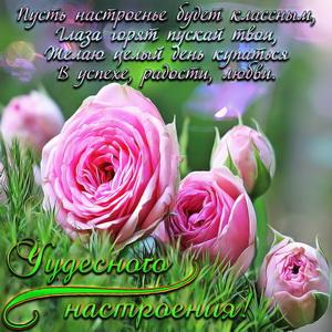 Картинка чудесного настроения с розами