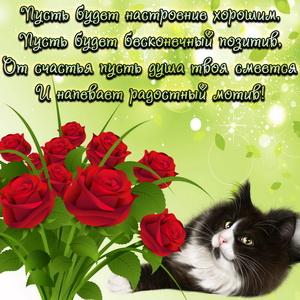 Картинка с котиком и позитивным пожеланием