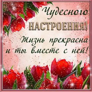Пожелание чудесного настроения на фоне тюльпанов