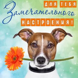 Картинка с собачкой для замечательного настроения