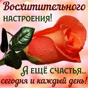 Открытка с розой и пожеланием счастья