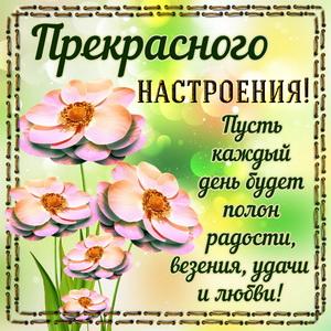 Цветы в рамочке для прекрасного настроения