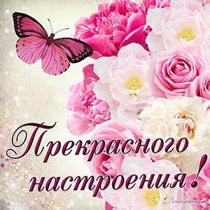 Картинка прекрасного настроения с цветами и бабочкой