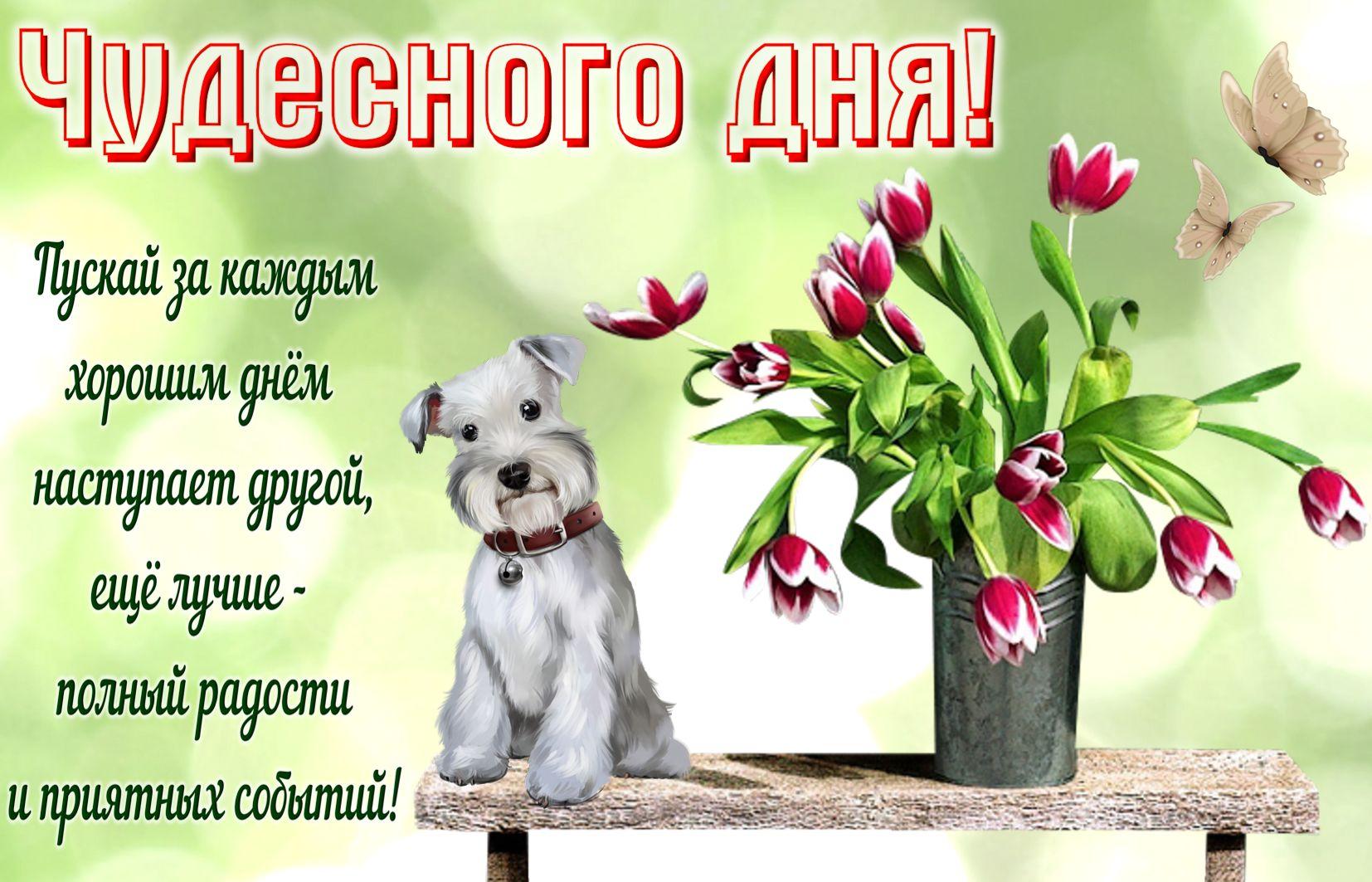 Открытка с пожеланием хорошего дня подруге, написать поздравительную