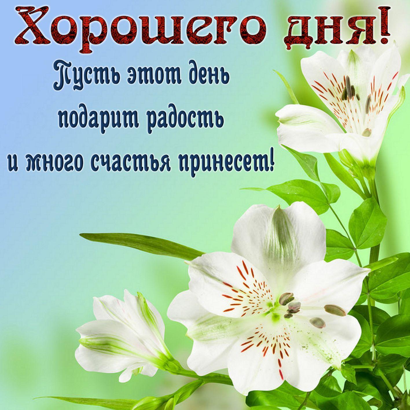 Красочные открытки с пожеланиями доброго дня