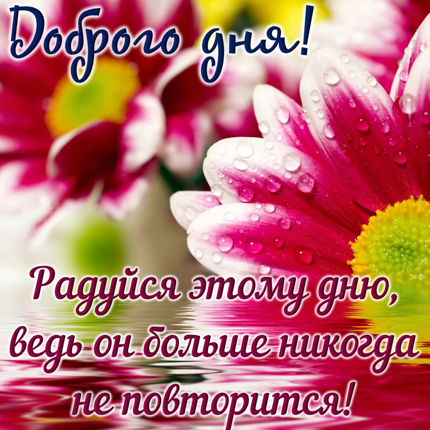 Фото открыток доброго дня