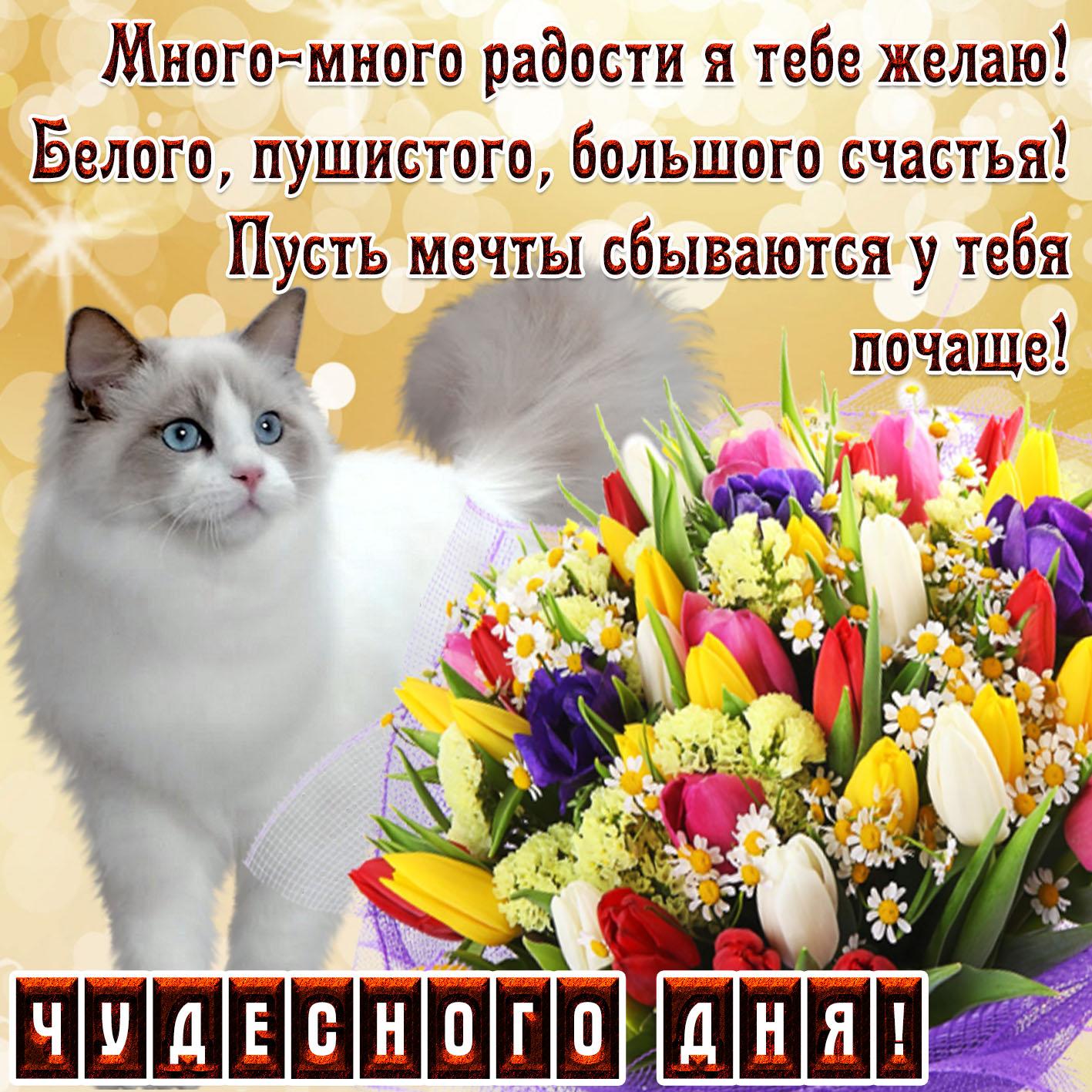 Открытка - пушистый котик с пожеланием чудесного дня