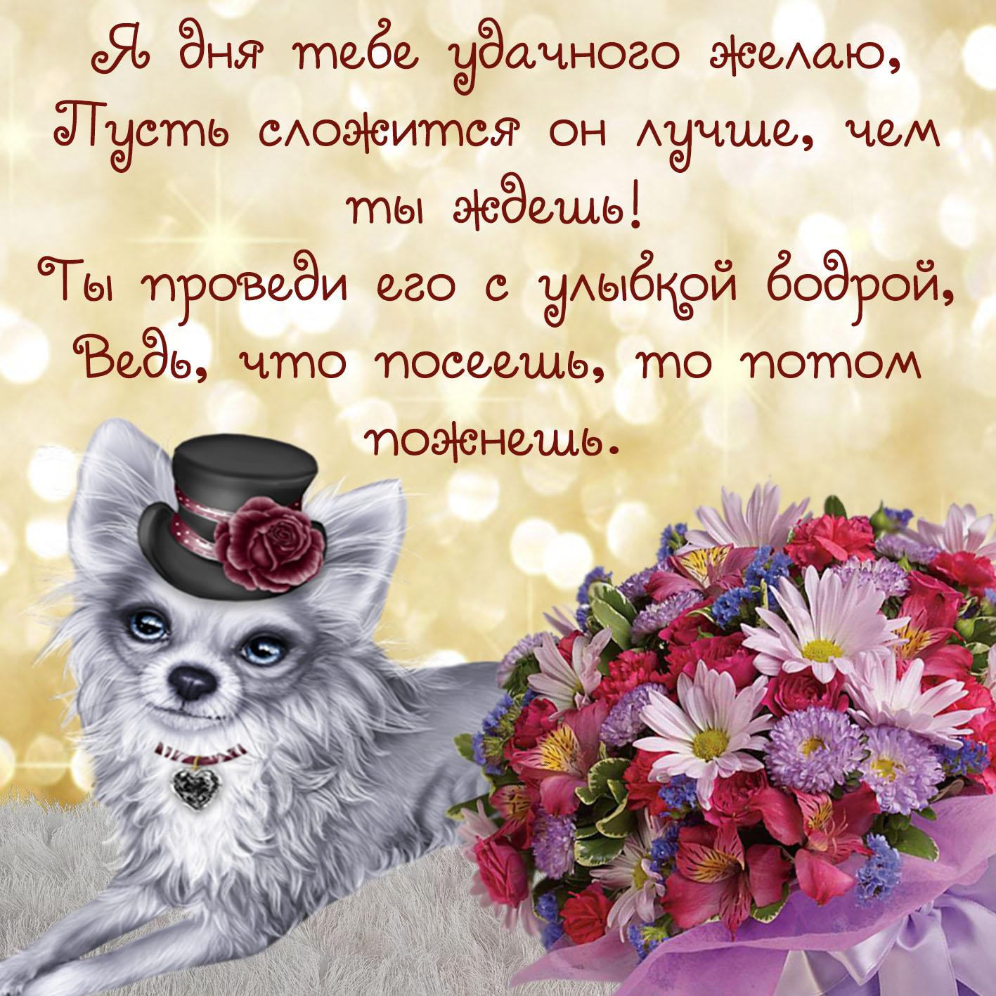 Открытка - собачка в шляпке с пожеланием удачного дня