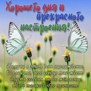 Открытка с бабочками на цветках