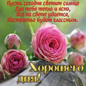 Розы и пожелание хорошего дня