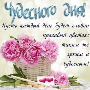 Розовые цветы и пожелание чудесного дня