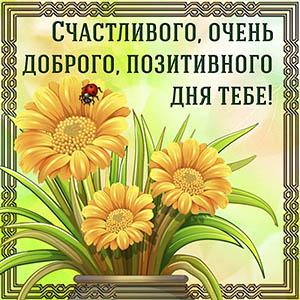 Картинка с цветами в рамке на позитивный день