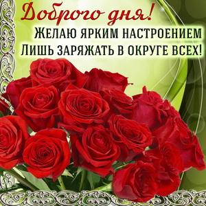Открытка с яркими розами и пожеланием доброго дня
