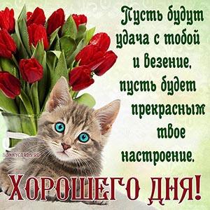 Открытка хорошего дня с котом и красными тюльпанами