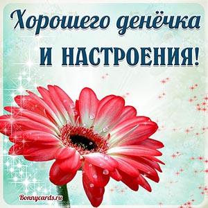 Картинка хорошего денёчка и настроения с цветком