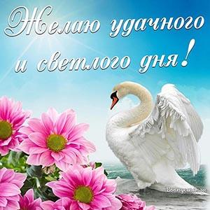 Открытка с лебедем - желаю удачного и светлого дня