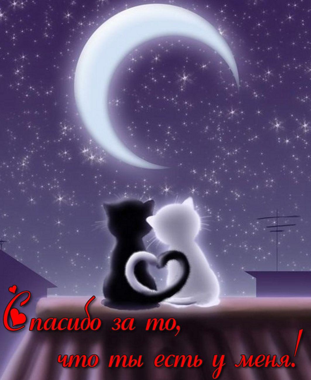 Открытка - два котика на крыше под луной