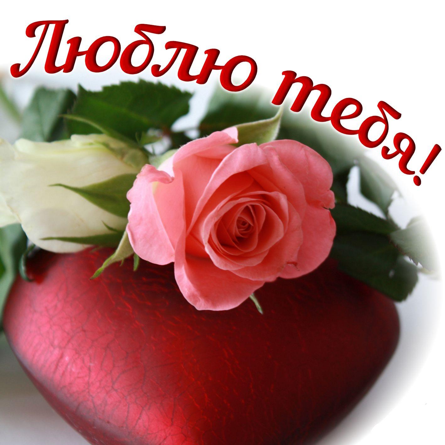 Снег, открытка для любимой розы