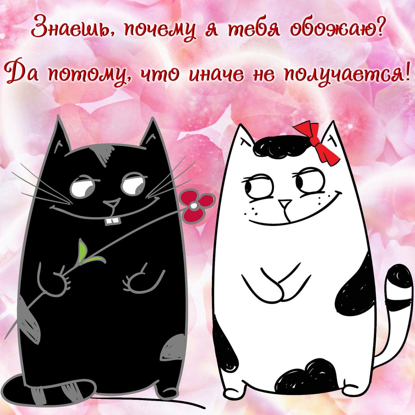 Влюбленные коты открытка