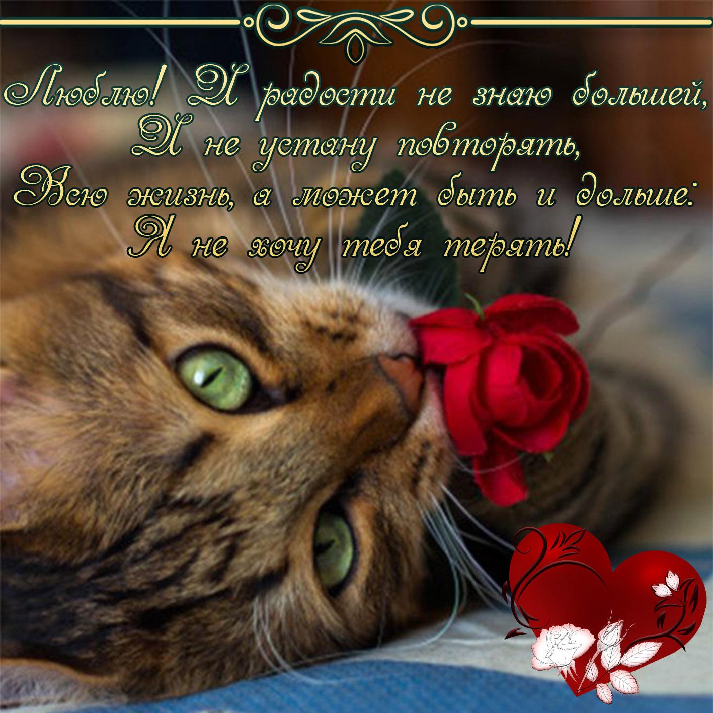 Мая, любимая кошечка открытка