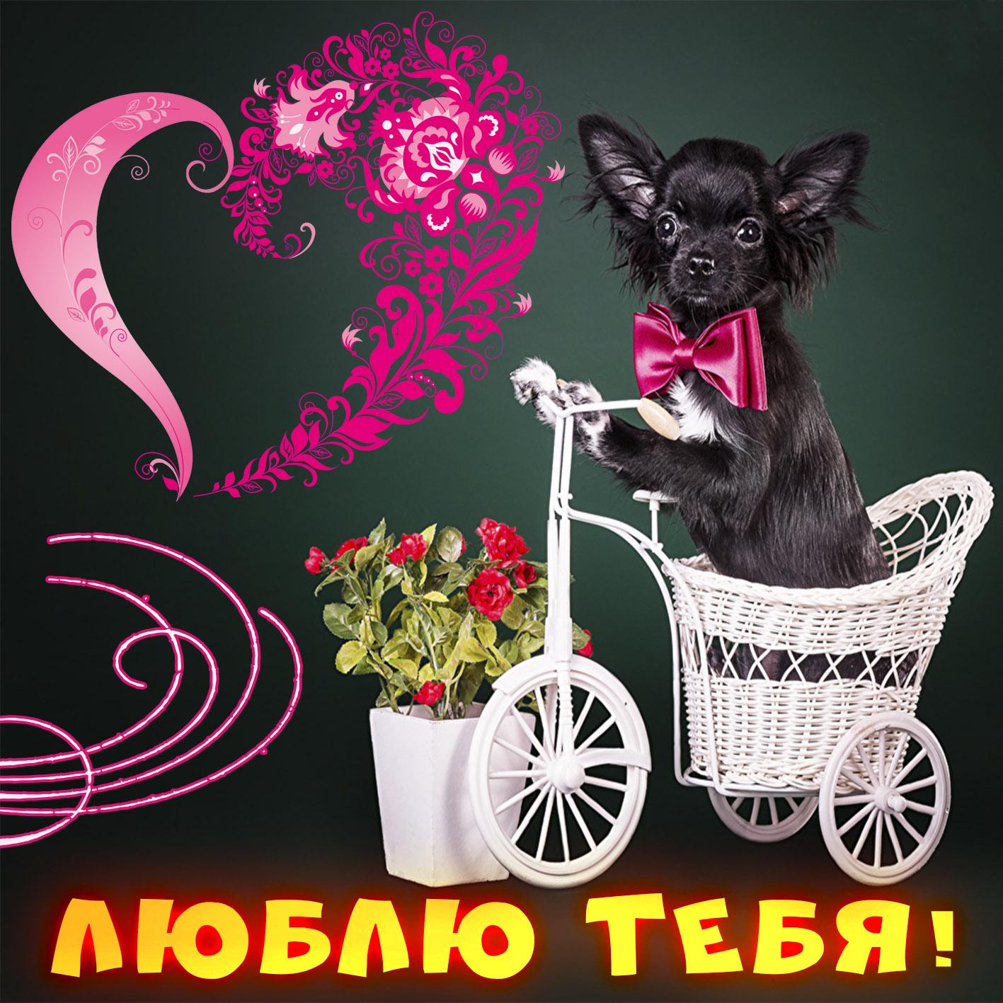 Открытка - забавная собачка на велосипеде любимому