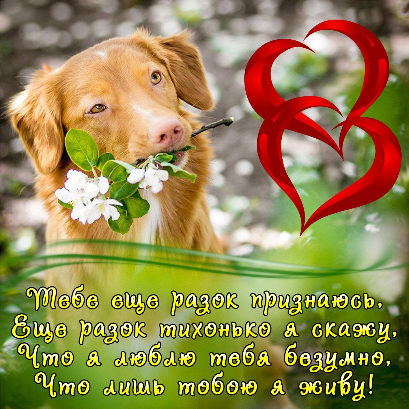 Открытка с собачкой для любимого человека