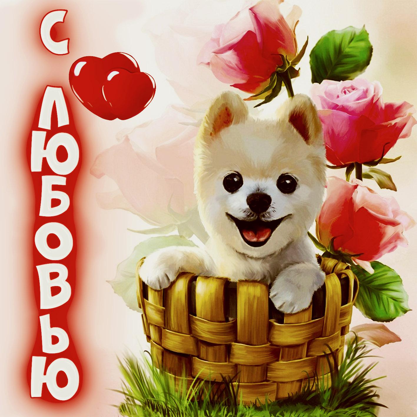 Открытка с любовью - милая собачка в корзинке с розами